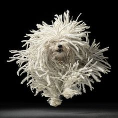 'Flying Mop' from 'Dog Gods' by Tim Flach