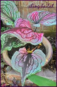 There are many varieties of Caladium. I have a few varieties growing in my garden and today I will introduce some of them to you in this po. Weird Plants, Unusual Plants, Rare Plants, Exotic Plants, House Plants Decor, Plant Decor, Tropical Garden, Tropical Plants, Caladium Garden