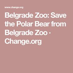 Belgrade Zoo: Save the Polar Bear from Belgrade Zoo · Change.org