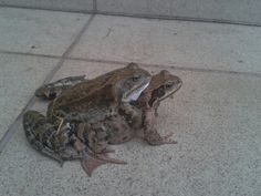 Frogs;)