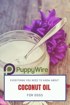 Find out the benefits of coconut oil for dogs as well as how to use it on your dog's skin and ears for example.
