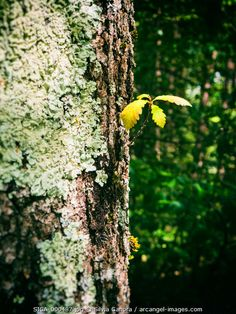 Tender sprout sticking out of a tree- ©Silvia Ganora Photography - All Rights Reserved  #bookcovers #nature #trees