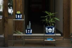 Kaenjusai pots and plants, one of the collaborations with Nakagawa Masashichi Shoten.