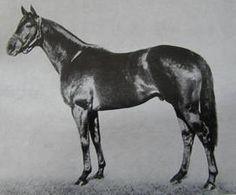 Hard Tack (Stallion) born 1926 - Sire:  Man o' War Dam: Tea Biscuit.  Hard Tack was good looking like Man o' War.  Sired Seabiscuit