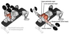 Targets your upper pectoralis major. Your lower pectoralis major, anterior deltoid, and the short head of your biceps brachii act as synergists. Also known as the dumbbell chest fly. Body Training, Muscle Training, Weight Training, Training Exercises, Dumbbell Fly, Dumbbell Workout, Best Chest Workout, Chest Workouts, Chest Exercises