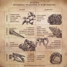 Seasonal planting & harvesting guide for the South