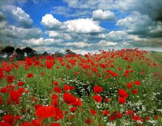 clouds, daisies, & poppies