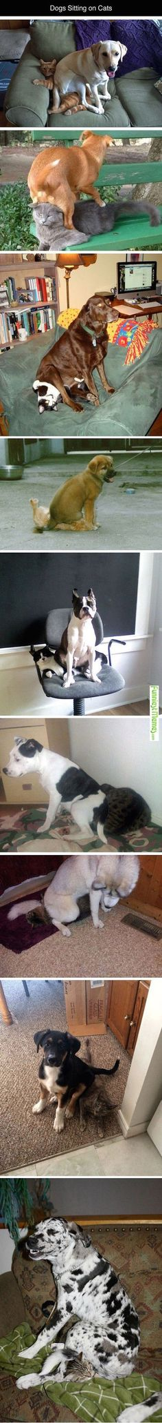 Dogs Sitting On Cats Is Just What Your Day Needs