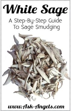White Sage Smudging- A Step By Step Guide! White sage is well known for it's cleansing and protective properties. Click to learn the benefits and uses of White Sage in this step-by-step guide..