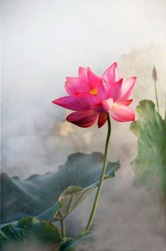 a single flower can divert my attention from negativity