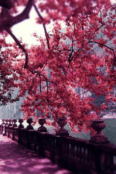 Autumn - The most beautiful season ~ By Luiza Lazar