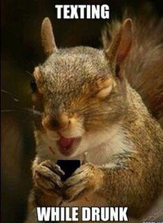 a8182b7831e87a58f800945137e79bcb drunk texts chipmunks funny squirrels, funny squirrel photos, squirrel memes oh, so,Funny Squirrel Memes