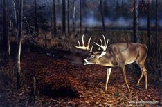 "On a very brisk frosty morning a large whitetail buck stops near the misty covered trees in Brian's Kuether deer print WHO'S BEEN HERE?"" ""The early morning silence is broken when a huge Whitetail Buck Whitetail Deer Pictures, Whitetail Deer Hunting, Moose Hunting, Hunting Art, Whitetail Bucks, Deer Pics, Hunting Stuff, Deer Art, Moose Art"