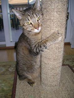 Purrfect Post on Pinterest | Scratching Post, Sisal and ...