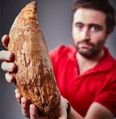 "This hand-out picture released by Museum Victoria on April 22, 2016 shows Erich Fitzgerald, a palaeontologist at the Museum Victoria,Image copyrightAFP/Museum Victoria Image caption Palaeontologist Erich Fitzgerald (pictured) from Museum Victoria said the find was internationally significant A giant tooth discovered on a beach in Australia is the first evidence that enormous ""killer"" whales lived outside the Americas, researchers say. Collector Murray Orr found the 30cm-long (12 inch) fossil…"