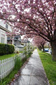 """Pink Tree Street - From DanniPDX Blog """"Buyers: How to Survive and Win in a Seller's Market"""" http://www.dannipdx.com/how-to-survive-and-win-in-a-sellers-market/ #realestate #portland #realtor"""