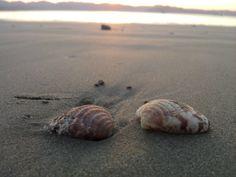conchas de mar