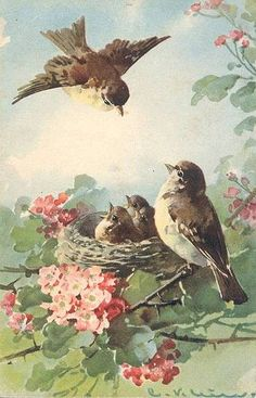 Vintage Bird's Nest by Catherine Klein Images Vintage, Vintage Pictures, Vintage Cards, Vintage Postcards, Baby Pictures, Catherine Klein, Bird Art, Vintage Prints, Vintage Style