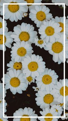 iPhone Wallpaper - Flower daisy spring floral white and yellow summer background wallpaper you can . Daisy Wallpaper, Spring Wallpaper, Cute Wallpaper For Phone, Trendy Wallpaper, New Wallpaper, Mobile Wallpaper, Iphone Wallpaper, Cute Wallpapers, Floral Wallpapers