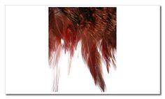 tira de plumas marrón