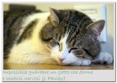Impossibile guardare un gatto che dorme ... - La Stampa