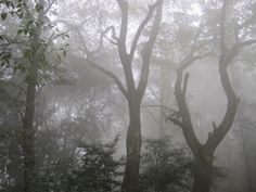 Poison Tree, Foggy Forest, Gloomy Day, Italian Summer, Forest Fairy, Cool Names, Faeries, Botany, Hogwarts