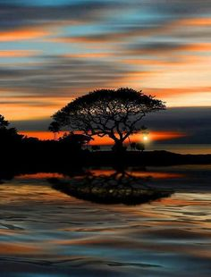 ✯ Beautiful tree and sunset Amazing Sunsets, Amazing Nature, Beautiful World, Beautiful Images, Beautiful Things, Beautiful Sunrise, Belle Photo, Pretty Pictures, Amazing Photos
