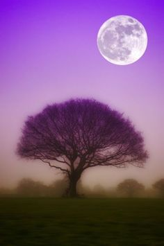 What a beautiful photo! Light purple sky and dark purple shadowed tree during a full moon. Or, has the photo been altered? Moon Photos, Moon Pictures, Pretty Pictures, Stars Night, Good Night Moon, Beautiful Moon, Beautiful World, Foto Nature, Shoot The Moon