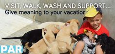 Pet�s adoption - A New Perspective of Responsible Tourism - Riviera Maya Playa Animal Rescue  PAR Animal Shelter Rescue Playa del Carmen Mexico