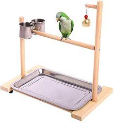 Cockatiel, Budgies, Parrots, Diy Bird Toys, Parrot Perch, Crazy Bird, Pet Supply Stores, Conure, Animal House