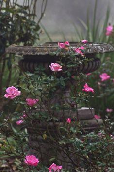 Ormond Plantation garden (by praline3001)