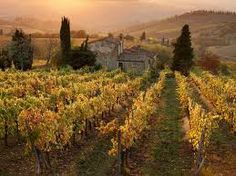 sample some vino in Panzano, Italy