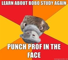 """[Picture: Background: 6 piece pie style colour split with red, orange, and yellow alternating. Foreground: a head-on photo of a platypus's face. Top text: """"Learn about Bobo Study AGAIN"""" Bottom text: """"Punch prof. in the face""""]"""