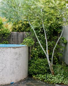 Fiona Brockhoff's Seaside Rebellion - The Planthunter Small Swimming Pools, Swimming Pool Designs, Small Pools, Side Yard Landscaping, Australian Garden, Plunge Pool, Outdoor Plants, Outdoor Areas, Garden Pool