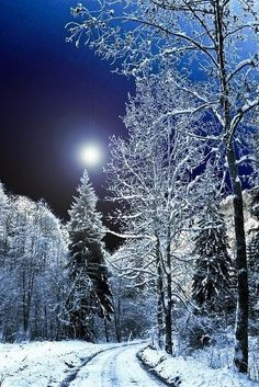 Winter And Christmas Scenery has members. Winter And Christmas Scenery Winter Szenen, Winter Love, Winter Magic, Clear Winter, Dark Winter, Cool Photos, Beautiful Pictures, Amazing Photos, Snow Scenes
