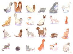 http://www.kness.net/wp-content/uploads/2015/06/24-cat-breeds.jpg