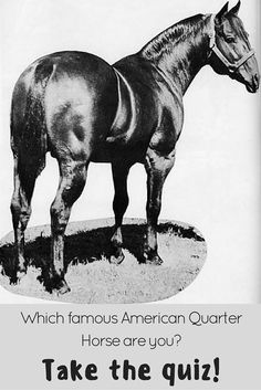 Are you more of a Rugged Lark or a Mr San Peppy? Diamonds Sparkle or Mr Conclusion? Take the Famous American Quarter Horse Quiz to find out!