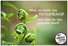 It's fiddlehead season! Considered a seasonal delicacy for us Canadians, fiddleh… Ostrich Fern, The Ostrich, Fiddlehead Fern Recipes, Wild Mushrooms, Stuffed Mushrooms, Rice Wraps, Types Of Beans, Healthy Vegetable Recipes
