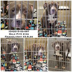 1000 images about please adopt me fast i luv u on pinterest animal shelter shelters and. Black Bedroom Furniture Sets. Home Design Ideas