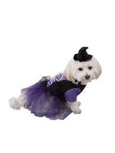 *** venta *** Fancy Dress Pet Costume ~ Negro Animal Dark Knight Batman Perro