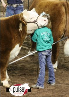 once upon a time with show steers, for the love of farming . Animals For Kids, Farm Animals, Animals And Pets, Cute Animals, Show Steers, Show Cows, Hereford Cattle, Farm Kids, Show Cattle