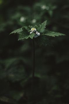 Green power is a subset of renewable energy and represents those renewable energy resources and technologies. Amazing Photography, Nature Photography, Photography Flowers, Dark Green Aesthetic, Nature Aesthetic, Slytherin Aesthetic, Dark Flowers, Deep Forest, Hunter Green
