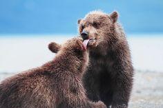 Лучшие фото дикой природы России - 2015