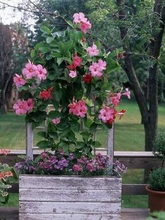The 15 Best Heat-Tolerant Plants for Decks and Patios Mandevilla - One of the most regal flowering vines, mandevilla produces large trumpet-shape blooms in shades of red, white, and pink. It's a fast-growing climber that blooms profusely. Container Plants, Container Gardening, Fast Growing Climbers, Flowering Vines, Window Boxes, Window Frames, Flower Boxes, Flower Baskets, Flower Planters