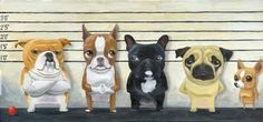 The Line Up by rubenacker with Boston Terriers, Bulldogs, & Pugs, & a Chihuahua