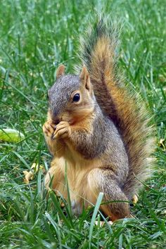 Squirrels - one of the cutest things on the planet