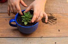 Reaproveitando as xícaras : aprenda a fazer um vaso de suculentas com xícaras. Projetos para inspiração e tutorial (is) faça você mesmo. // faça você mesma, DIY, inspiração, decoração, ideia, tutorial, jardinagem, artesanato, xícara, fura xícara, fazer vaso de planta, planta, suculenta, furadeira