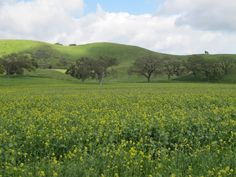 Figueroa Mountain Road, Los Olivos, Santa Barbara California