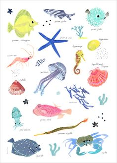Ocean, Sea Life Poster for a kid's room by Charline Picard