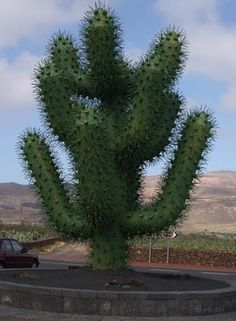 Your family tree must have been a cactus because everyone on it is a fucken prick